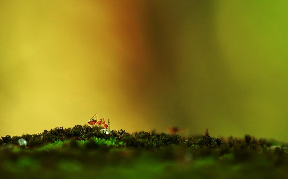 Ant, Nature, Ants World, Ants, Environment, Sugar