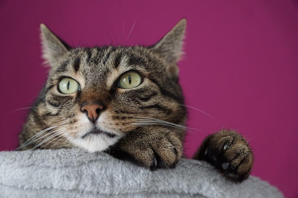 zdarma velká kočička com