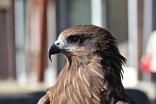 δωρεάν ταινίες μαύρο πουλί λεσβίες να παρασυρθεί