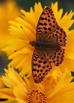 Butterfly, Flower, Yellow, Nature