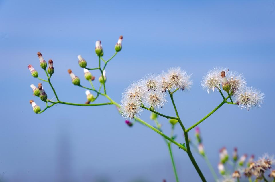 Bunga Bunga Liar Indah Foto Gratis Di Pixabay