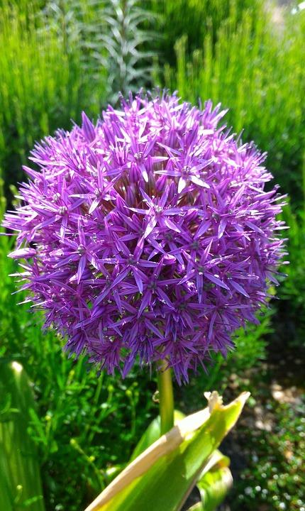 Garten Blume Kostenloses Foto Auf Pixabay