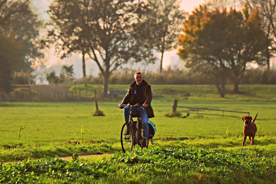 男, 自転車, 犬, 道路, フィールド, 農村, 田舎, 日当たりの良い, 木, 運動, 犬の散歩, 人