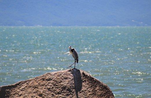 μεγάλο πουλί φωτογραφίες γκαλερί