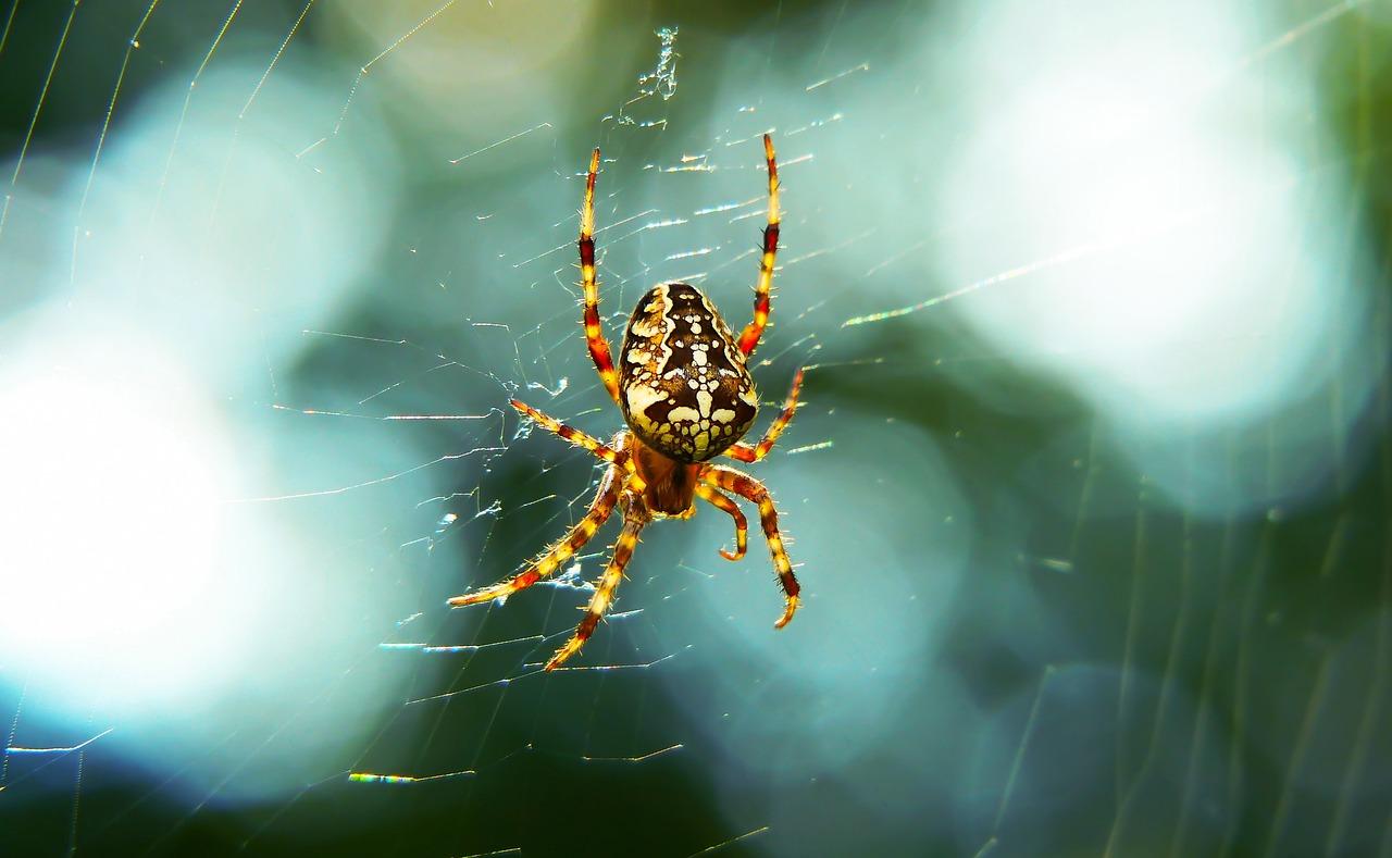 крылья блум паук крестоносец в паутине на лопатке фото может