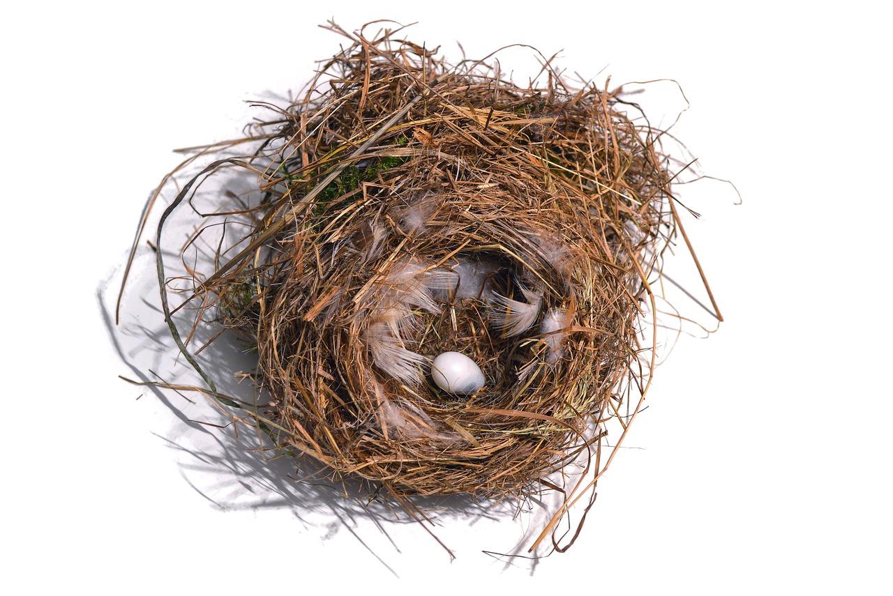 виды гнезд картинки наташка