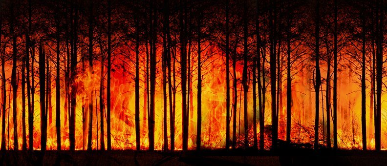 Forest Fire, Forest, Climate Change