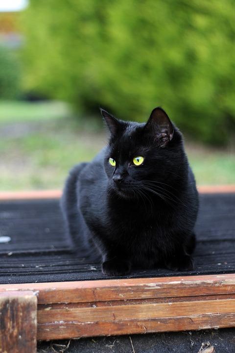eben velká černá kočička