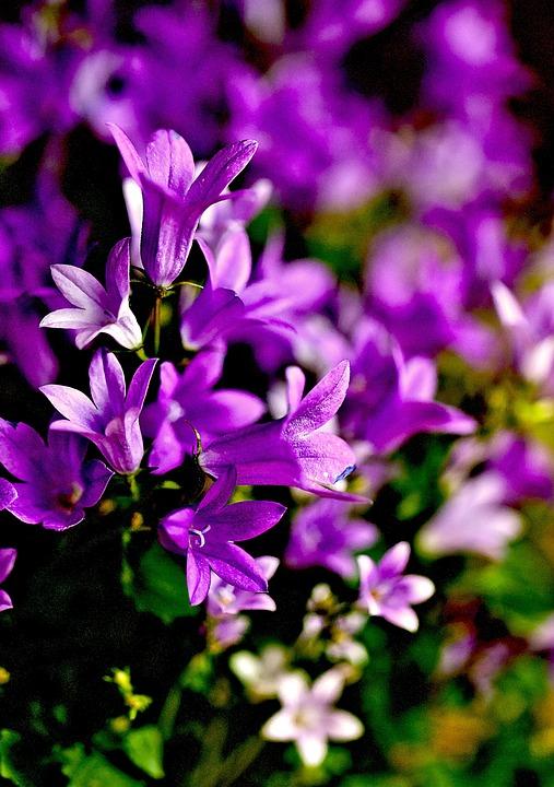 Fiori Piccoli.Fiori Piccoli Blu Foto Gratis Su Pixabay