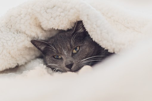 Cat, Eyes, Close Up, Grey, Wool, Blanket