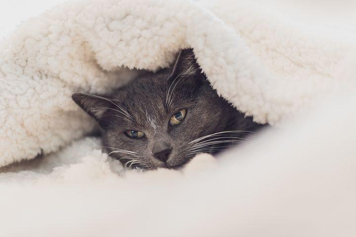 cat-3841448__480.jpg
