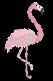 60 Free Pink Flamingo Flamingo Illustrations Pixabay
