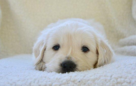 puppy-3842997__340.jpg