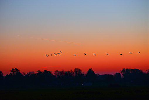 Dawn, Sunrise, Early Morning, Skies