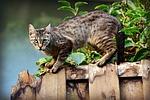 kot, zwierząt, makrela