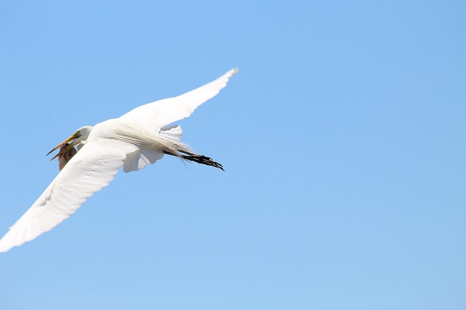 White Crane Bird Animal - Free photo on Pixabay