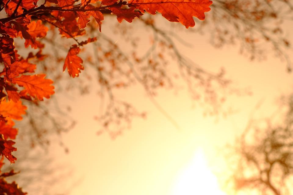 【日常】秋の訪れ