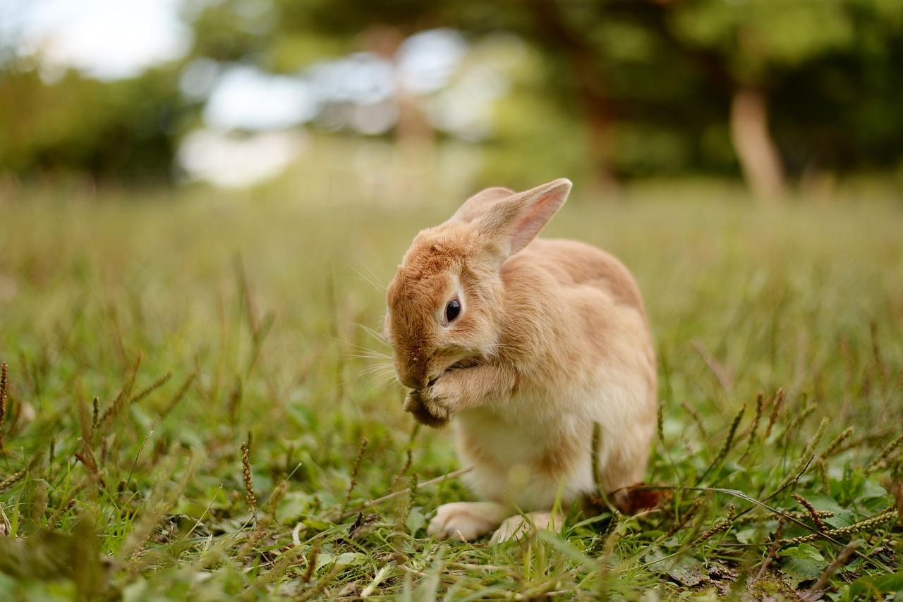 еще папа грызуны зайцы кролики фото описание востоке