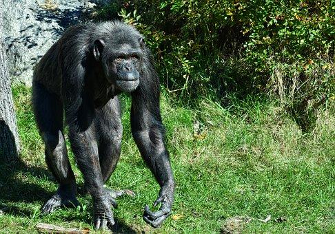 Más De 200 Y Mono Gratis Chimpancé Imágenes Pixabay PnwO80k