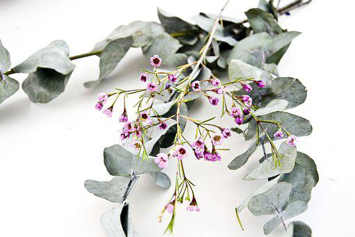 Bunga Sederhana Gambar Pixabay Unduh Gambar Gambar Gratis