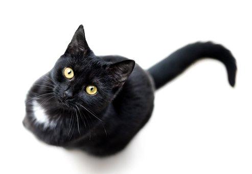 Katze, Schwarz, Isoliert, Single, Tier