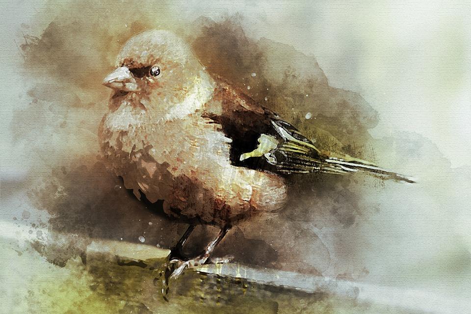 obrázok mužov vtáky nahé model tapety