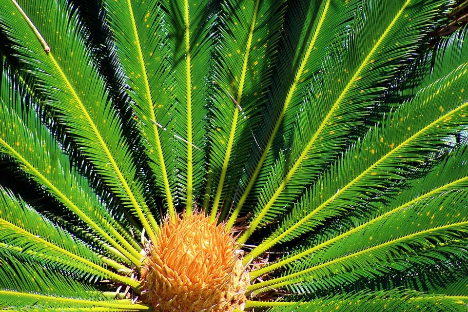 Pianta Verde Natura Foto Gratis Su Pixabay
