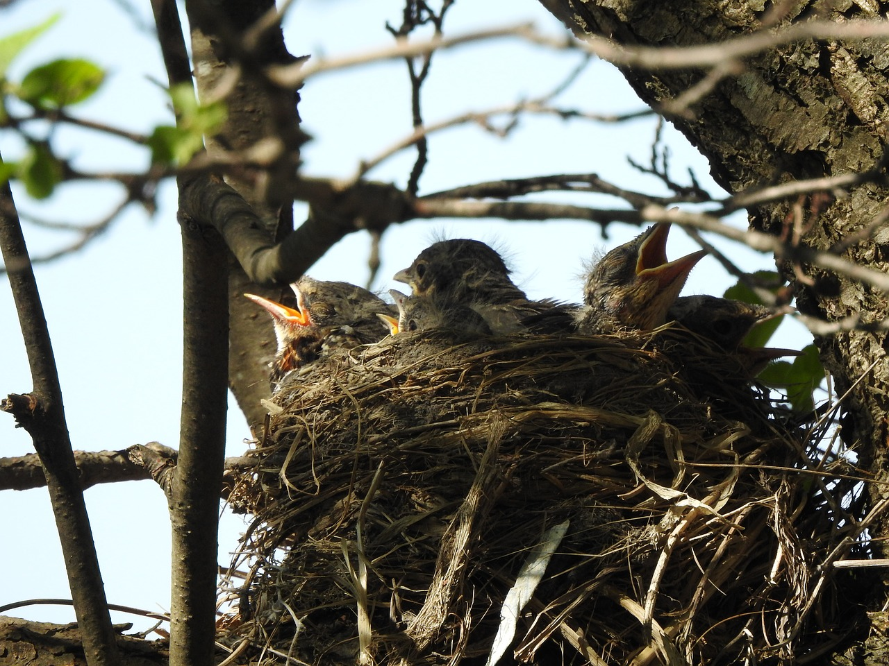 Птичка в гнезде картинки