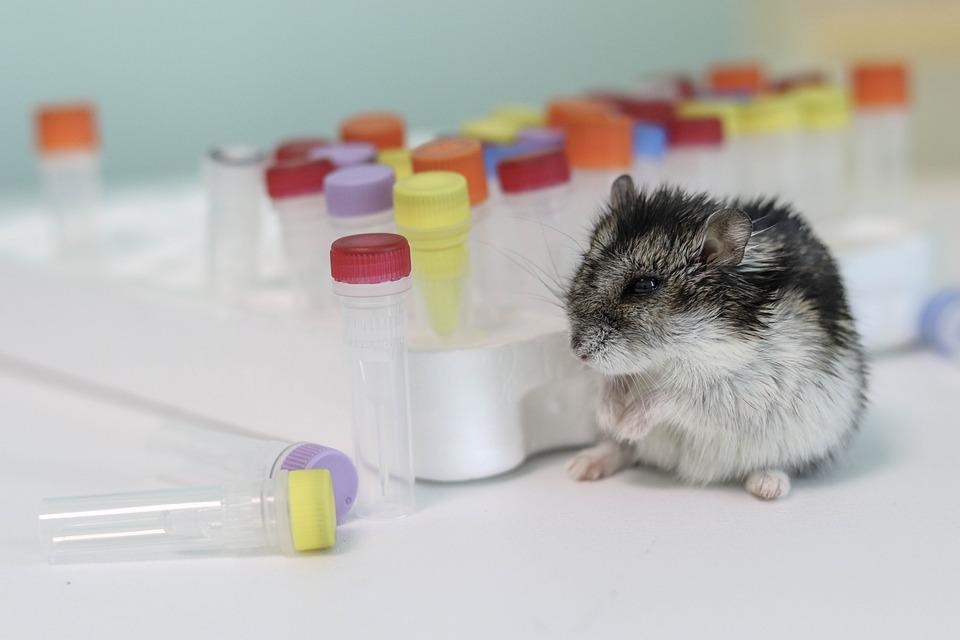 Hamster, Background, Pcr Tube, Tubes, Tube, Vial