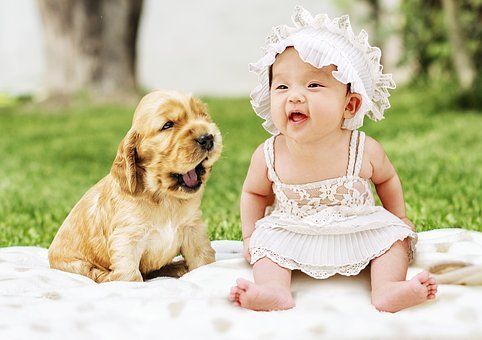 Baby, Dog, Animal, Cute, Pet, Puppies