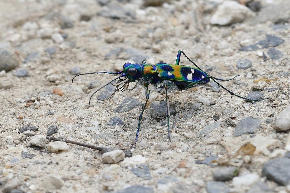 Warna Warni Macan Kumbang Serangga Foto Gratis Di Pixabay
