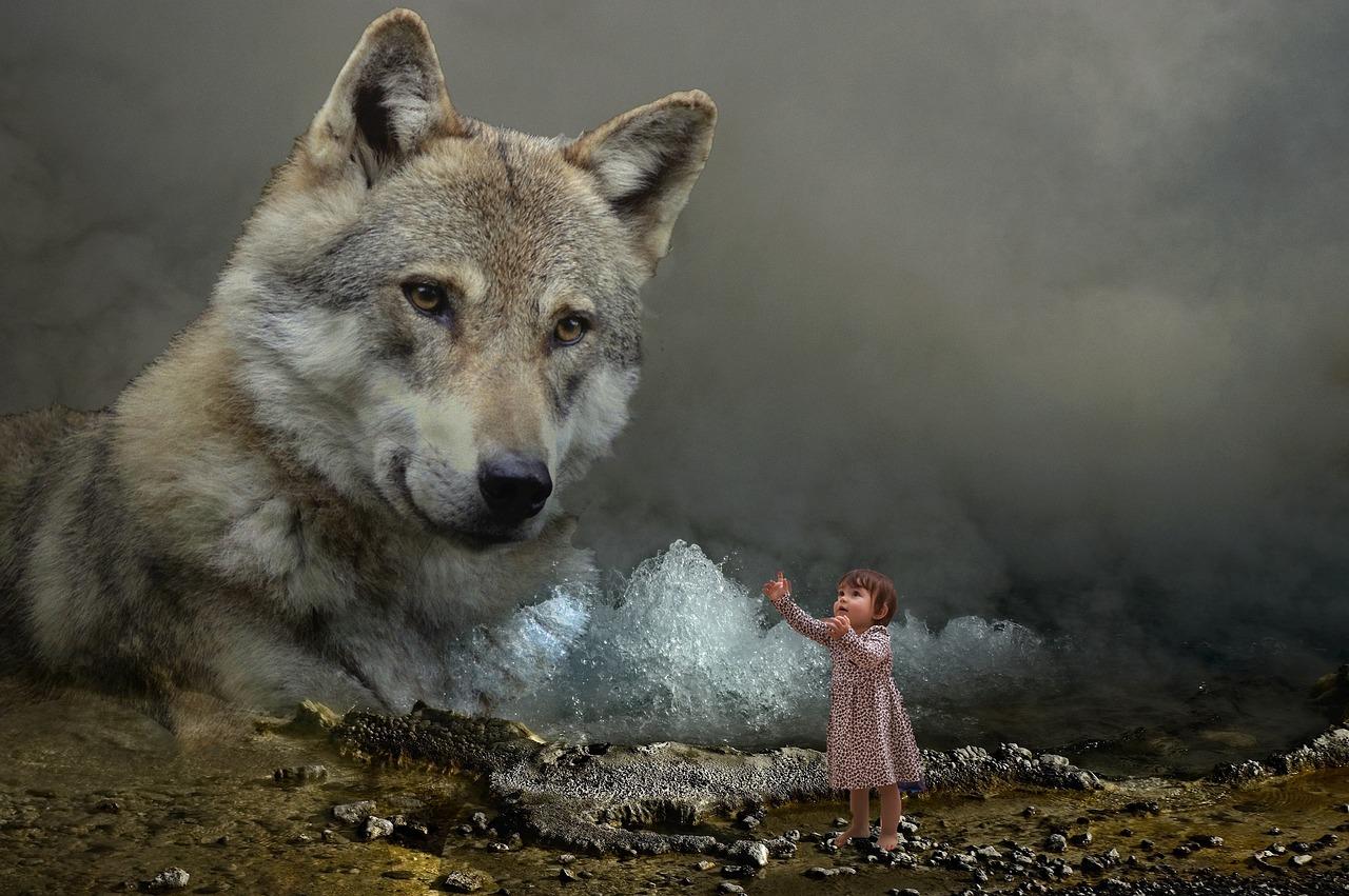 пошла таинственная фото волка поскольку для