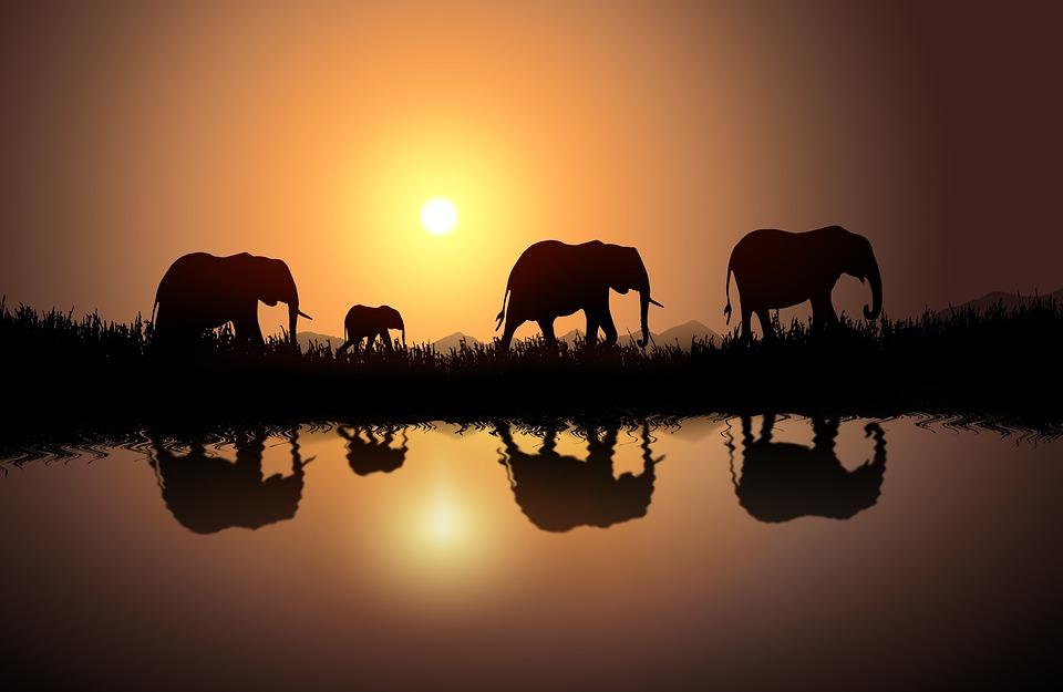Elefantes, África, Savanas, Safari, Elefante