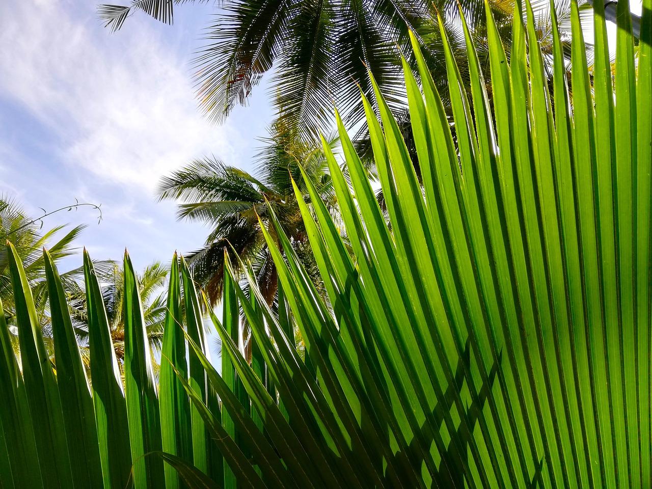 смотреть фото пальм тропических пригибать