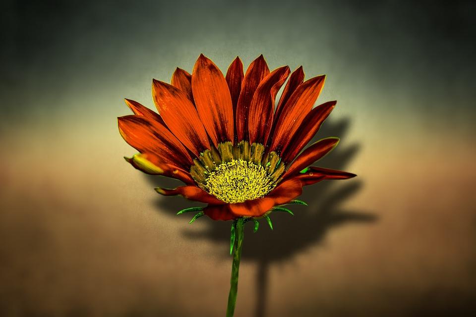 Flori Frumoase Primăvară Fotografie Gratuită Pe Pixabay