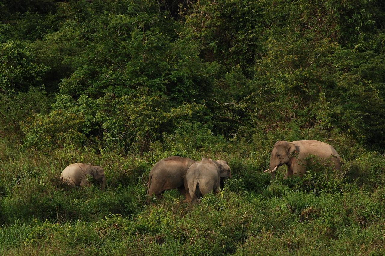 National Park Thailand Elephant - ภาพฟรีบน Pixabay