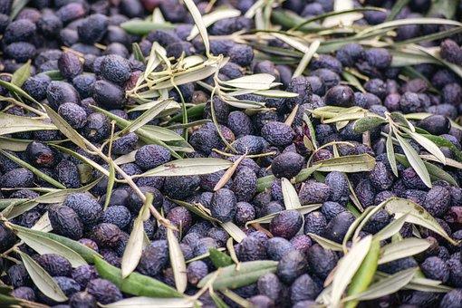 400+ Free Olive Oil & Oil Images - Pixabay