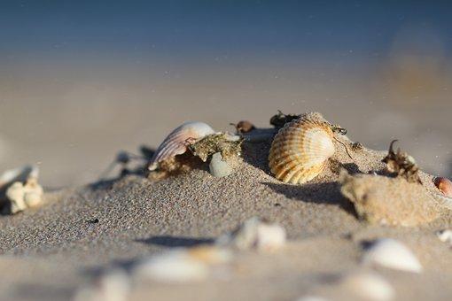 砂, 海, シェル, 水, シーシェル, 海岸, サンディ, 夏, 自然
