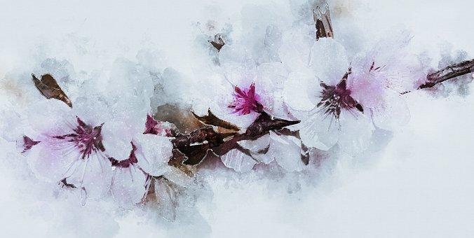 Blossom, Bloom, Almond Blossom