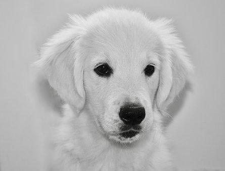dog-3868722__340.jpg