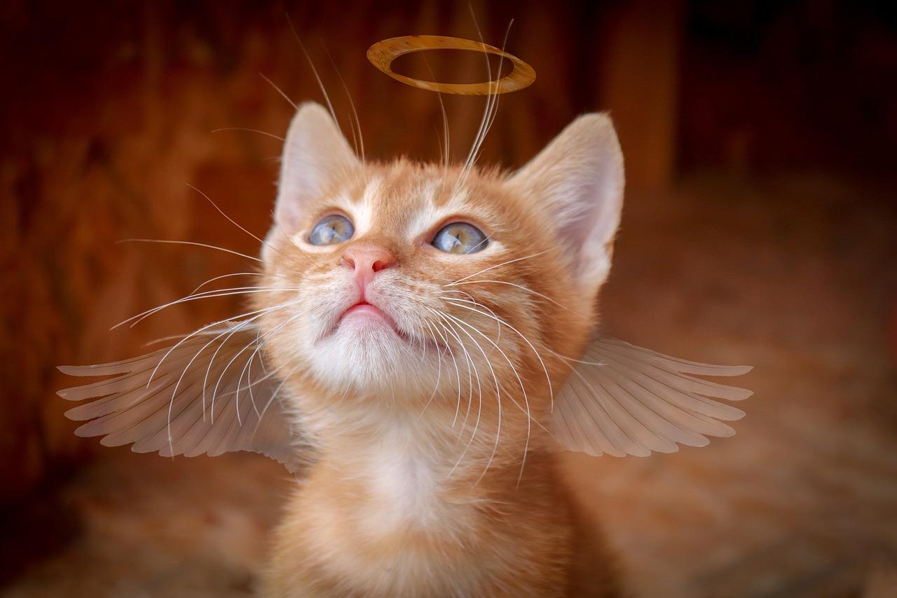 cat-3869583_1280.jpg