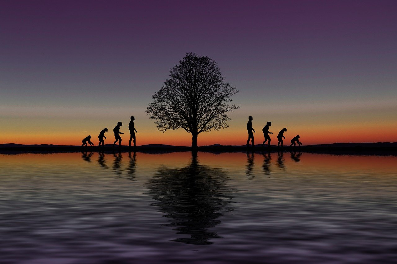 進化, 開発, フォワード, 木, 猿, 人間, Darvin, 逆, 破壊, 除去, 変化, 変更, 知識