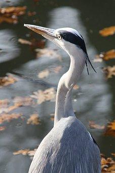 Veľké vtáky Lil mláďatá veľký péro podporu skupiny