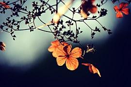 Flower, Branch, Twig, Autumn Color