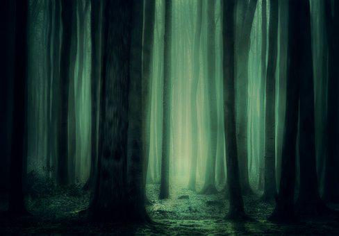 Forest, Trees, Fog, Atmosphere