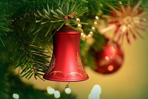 Weihnachtsbilder Tannenzweig.2 000 Free Firs Fir Tree Photos Pixabay