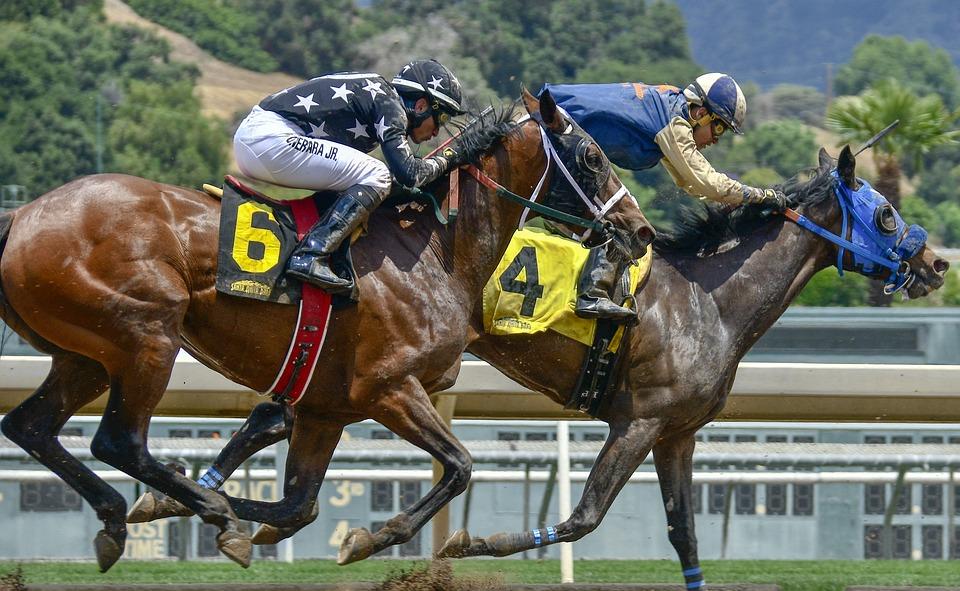 ม้า การแข่งม้า การแข่งขัน - ภาพฟรีบน Pixabay