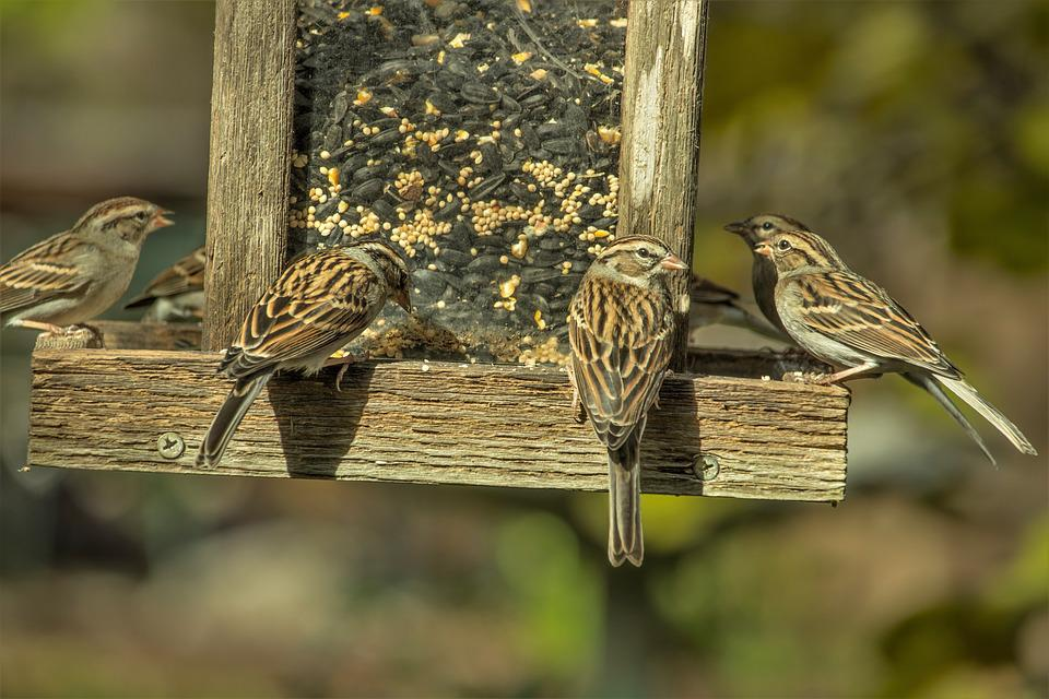 birds on wooden feeder