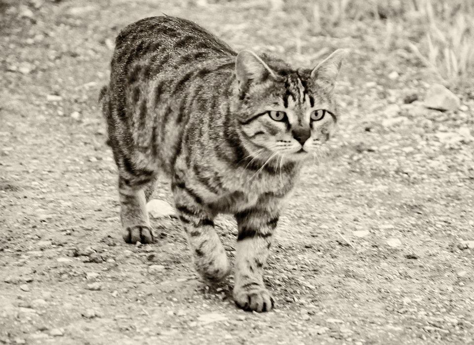 c3865dfe7c7b Γάτα Κατοικίδιο Ζώο - Δωρεάν φωτογραφία στο Pixabay