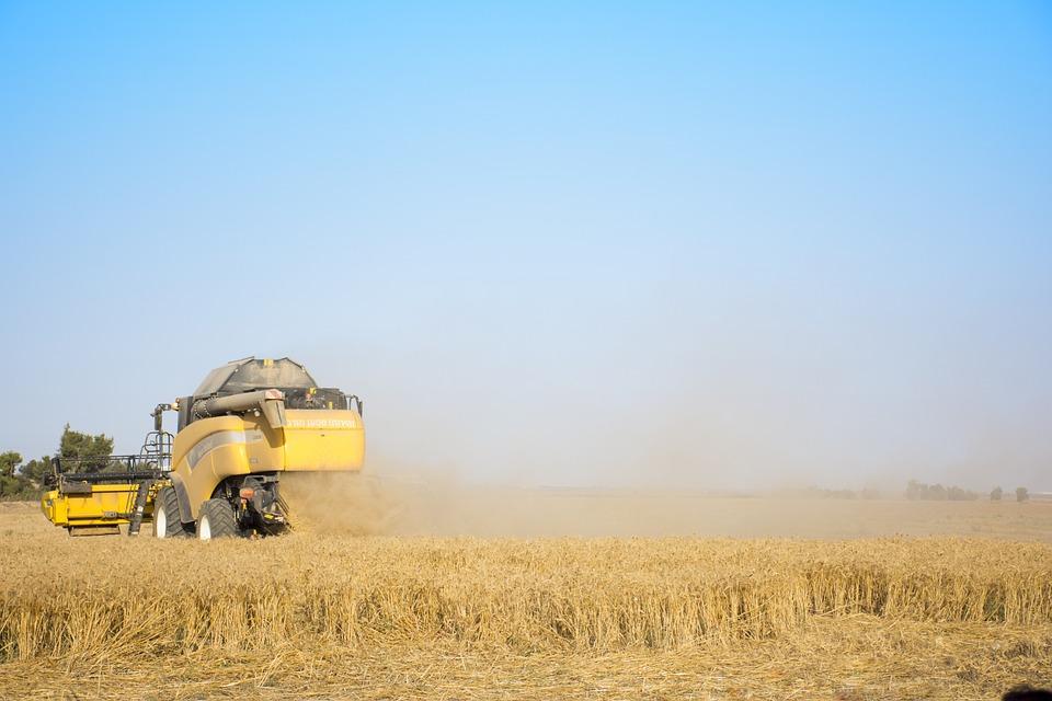 gul og gratis landbrug